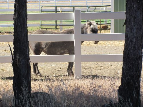 Vacation time in Bend, Oregon miniature horses,where to find miniature horses