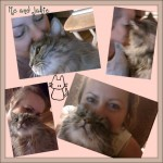 Cat owner pictures,how to make a picnik collage
