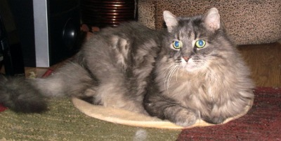 pet beds that warm up, products to keep pets warmer