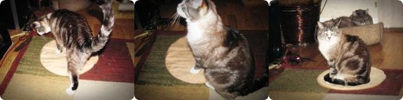 do cats like warming pads