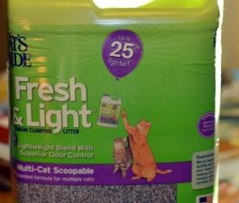 cat's-pride-fresh-and-light