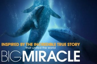 Big Miracle Movie and Teen Impact Contest Info
