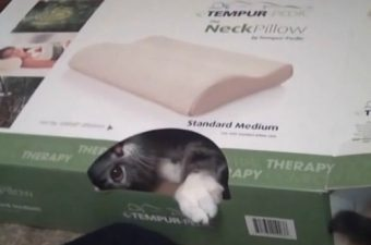 When your cat so kindly helps with product reviews (video)