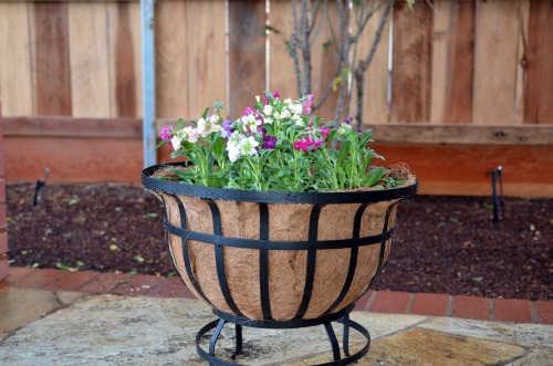 steel coco basket planter