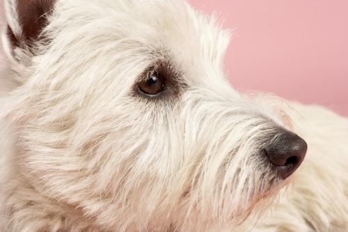 dog,shelter dogs,animal shelter
