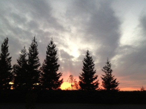 grey clouds,trees,sky,sunset