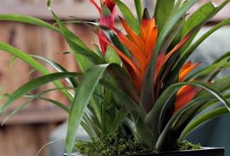 ProFlowers Tropical Bromeliad Garden Review
