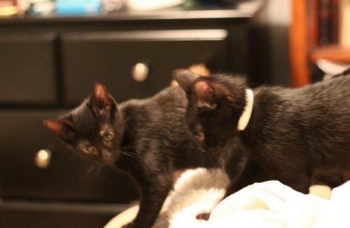 Black Cat Appreciation Day,black kittens