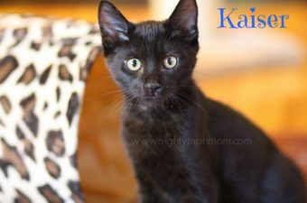 Black Cat Appreciation Day 8/17 – meet our new black kittens!
