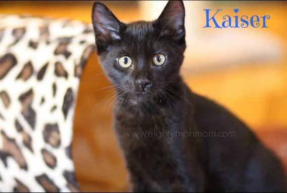 black kitten,black cat appreciation day