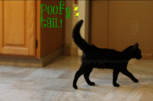 kitten,tail,black