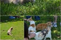 cat house on the kings,no kill,cat,sanctuary,Parlier