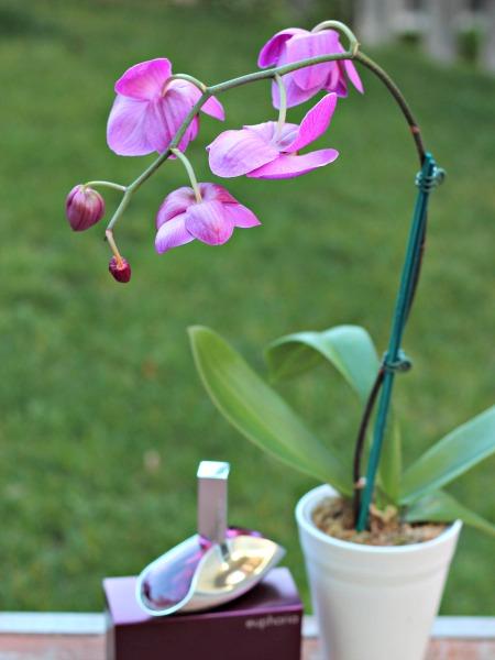 euphoria,Calvin Klein,orchid,mother's day