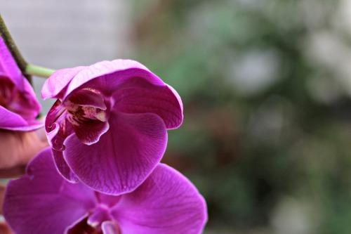 Orchid,euphoria Calvin Klein, Mother's Day,magenta