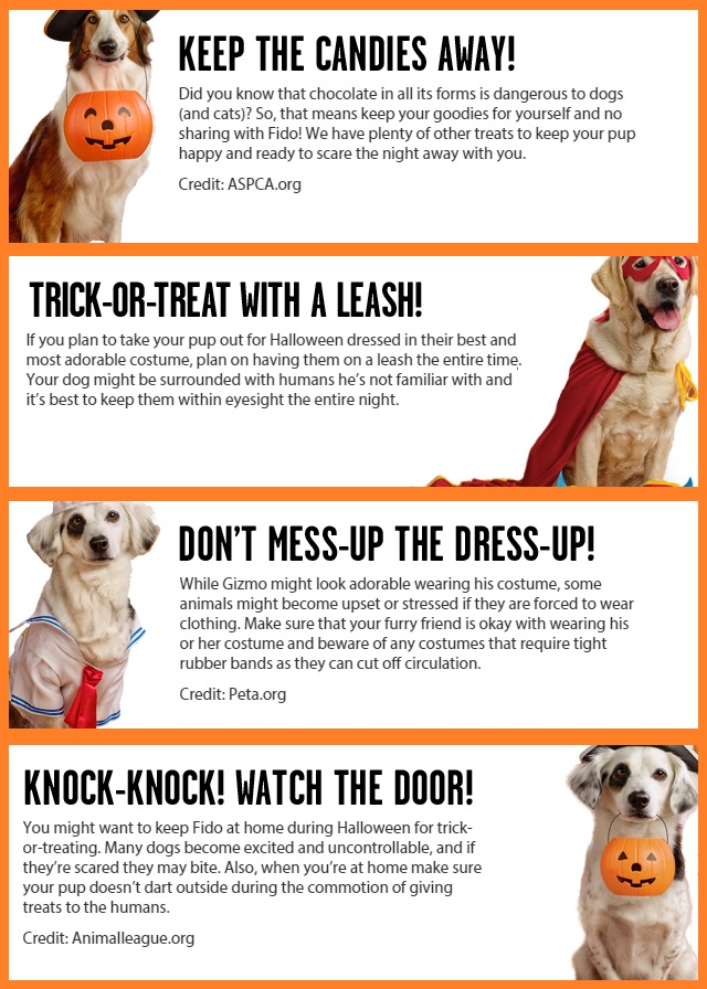 Big Heart Pet Brands Halloween Tips