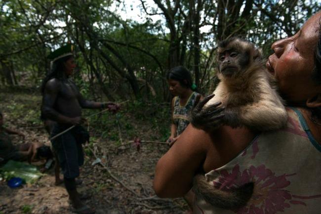 amazon,monkey
