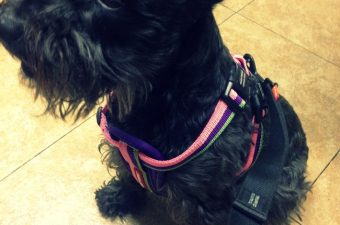 EzyDog Chest Plate Harness and Zero Shock Leash Review