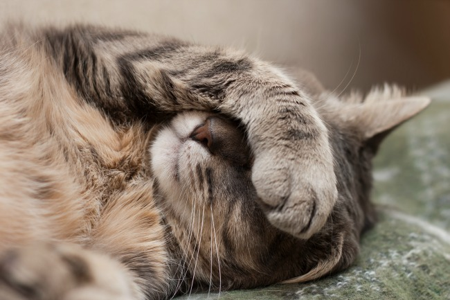 cat-sleeping-with-paw-over-eyes