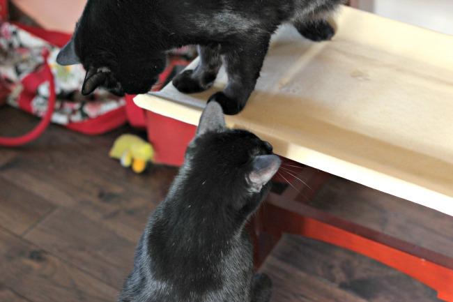 solvit Ms. Herzher double cat seat 1