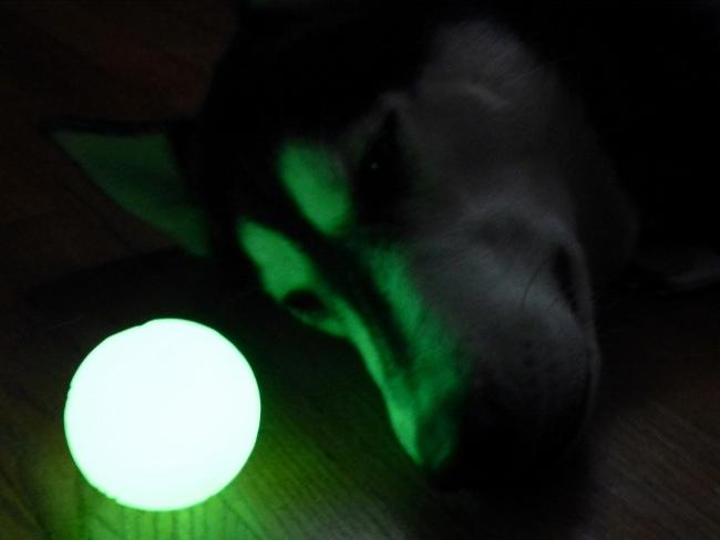 Chuckit! Max Glow Ball