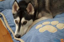 Aspen Pet Shearling Gusseted Pillow Bed