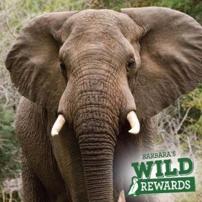 barbaras wild rewards elephant