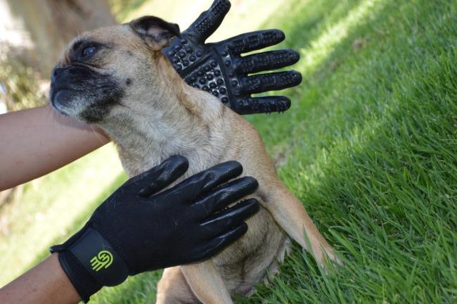 HandsOn Gloves for removing pet fur