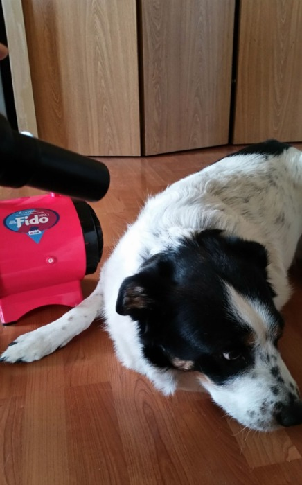 Fido Max-1 Dog Dryer
