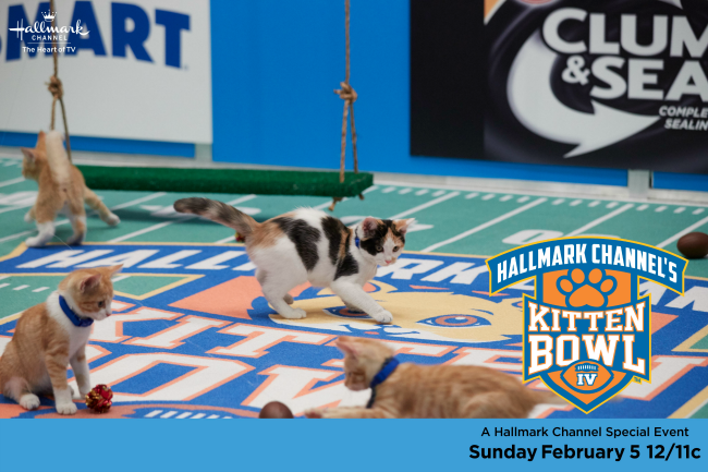 Kitten Bowl IV