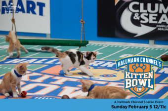Kitten Bowl IV this Sunday!