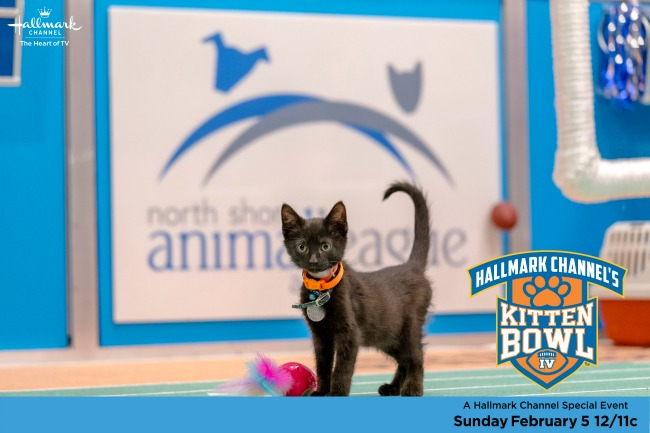 kitten bowl IV black kitten