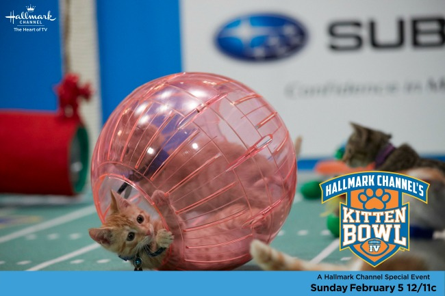 kitten bowl IV orange kitty