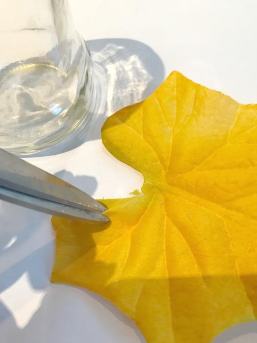 leaves scissors