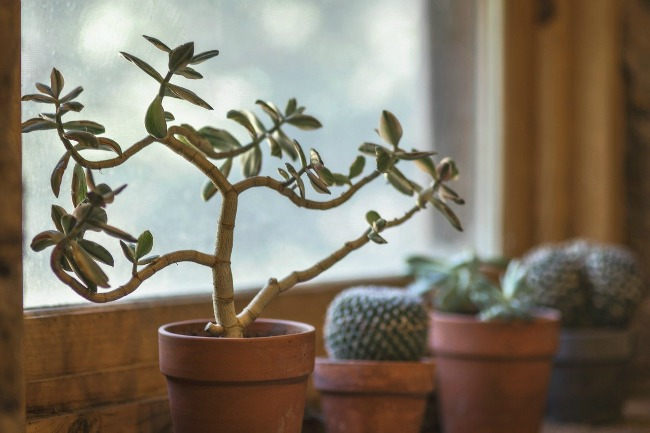 5 Ways of Taking Care of Indoor Plants