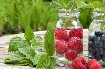 Fruit in Jar
