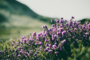 open field of flowers